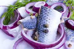 Herrings on a plate Royalty Free Stock Image