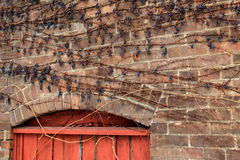 Herrliche alte Backsteinmauer mit verwitterter Tür und Reben Lizenzfreie Stockfotografie