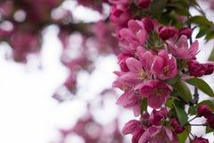 Herrliche Blüten Lizenzfreies Stockbild