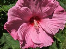 Herrliche Blumenblätter stockfotos