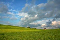 Herrliche grüne Wiese Stockfotografie