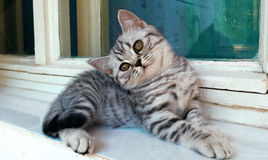 Herrliche Katze der getigerten Katze, die an einem Fenster sitzt Lizenzfreie Stockfotos
