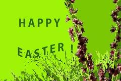 Herrliche Kirschniederlassungen auf einem grünen Hintergrund vektor abbildung