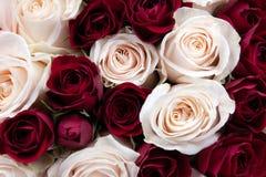Herrliche Nahaufnahme eines Blumenstraußes der roten und weißen Rosen Stockfotografie