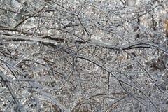 herrliche Nahaufnahmeansicht von den Baumbrunchs bedeckt mit Eis Stockbilder