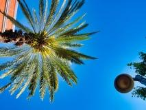 Herrliche Palme mitten in der Stadt lizenzfreie stockbilder