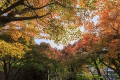 Herrlicher Ausblick, Fallfarbe bei Adashino Nenbutsu-ji, Japan im Au Stockbilder