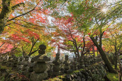 Herrlicher Ausblick, Fallfarbe bei Adashino Nenbutsu-ji, Japan im Au Lizenzfreies Stockfoto