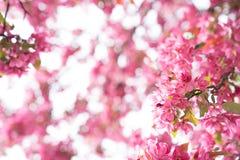 Herrlicher Blumen-Rahmen Stockbild