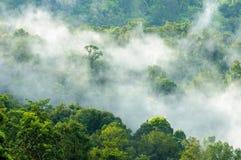 Herrlicher grüner Wald im Nebel nach Regen Stockbilder
