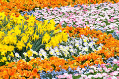 Herrliches Blumenbeet Stockbild