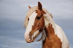 Herrliches Pferd Stockfotos