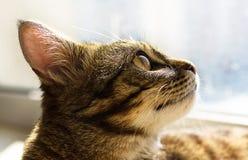 Herrliches Porträt der Katze mit gelben Augen Stockfotografie