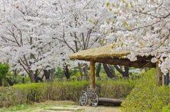 Herry blomstrar parkerar in med hjulstol Royaltyfria Foton