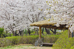 Herry kwitnie w parku z koła krzesłem Zdjęcia Royalty Free