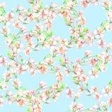 ¡ Herry, maçã de Ð, flores Teste padrão sem emenda da aquarela Fotografia de Stock