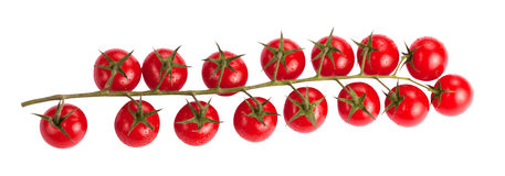 Сherry tomatoes on branch. Cherry tomatoes on branch with water drops isolated on white background Royalty Free Stock Photo