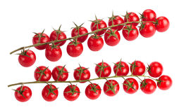 Сherry tomatoes on branch Stock Image