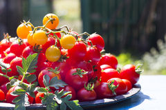 Сherry tomatoes on plate. Fresh cherry tomatoes on plate Royalty Free Stock Photos