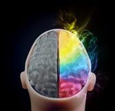 Hersen de hemisfeerconcept van de creativiteit Royalty-vrije Stock Afbeelding
