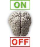 Hersenen vector illustratie