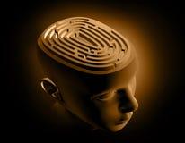 Hersenen Stock Afbeeldingen