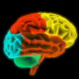 Hersenen Royalty-vrije Stock Afbeelding