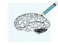 hersenen Stock Fotografie