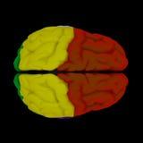 Hersenen-cerebrum Royalty-vrije Stock Fotografie