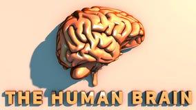 Hersenen degeneratieve ziekten, Parkinson, synapsen, neuronen, Alzheimer ` s Royalty-vrije Stock Fotografie