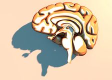 Hersenen degeneratieve ziekten, Parkinson, synapsen, neuronen, Alzheimer ` s Royalty-vrije Stock Foto