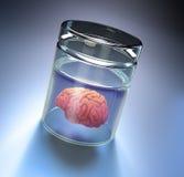 Hersenen in een grote kruik Royalty-vrije Stock Foto's