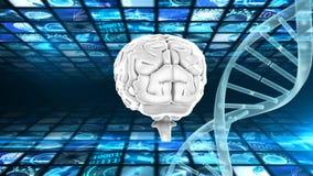 Hersenen en van DNA het dubbele schroef roteren stock illustratie