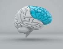 Hersenen, frontale kwab, afdeling vector illustratie
