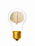 Hersenen gloeilamp stock afbeeldingen