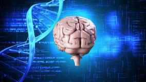 Hersenen het spinnen op DNA-achtergrond royalty-vrije illustratie