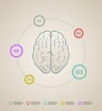 Hersenen infographic malplaatje Stock Afbeeldingen