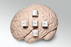 Hersenen met computersleutels Stock Afbeelding