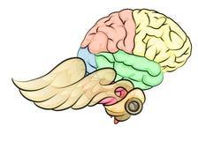 Hersenen met vleugels Royalty-vrije Stock Afbeeldingen