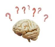 Hersenen met vraagtekens worden omringd dat Royalty-vrije Stock Foto's