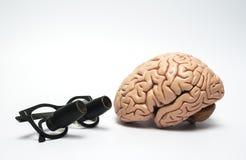 Hersenen model en chirurgische loupe Stock Afbeeldingen