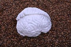 Hersenen op koffiebonen Stock Fotografie