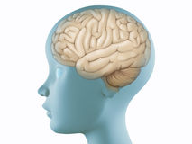 Hersenen in profielhoofd Stock Fotografie