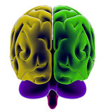 Hersenen, sectie, afdeling, scherpe delen, anatomiestudie stock illustratie