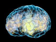 Hersenen, synapsen het 3d teruggeven Royalty-vrije Stock Foto's