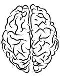 Hersenencontouren stock illustratie