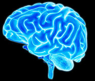 Hersenendetail vector illustratie