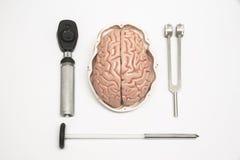 Hersenenmodel en materiaal Stock Afbeelding
