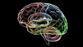 Hersenenröntgenstraal stock illustratie