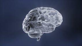 Hersenenrotatie stock videobeelden